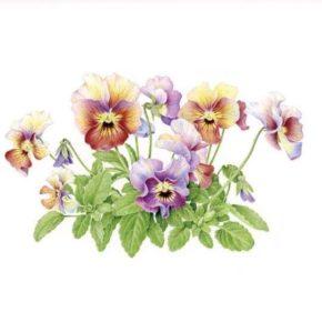 芝田美智子植物画教室展