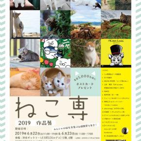 猫の合同展「ねこ専」 ※6月22日(土)~23日(日)開催です